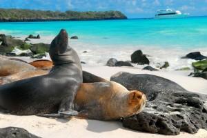 animales-islas-galapagos